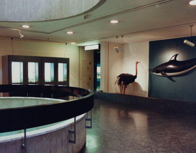 Candida-Höfer-Zoologisches-Museum-Genf-1989.-Colour-photograph-35.5-x-51.2-cm.-Kunsthaus-Zürich-Vereinigung-Zürcher-Kunstfreunde-Gruppe-Junge-Kunst-1991-©-2019-ProLitteris-Zurich