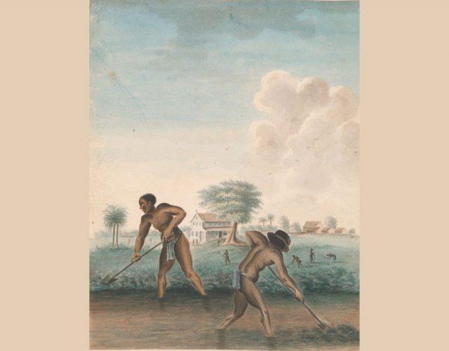 σκλαβιά 3